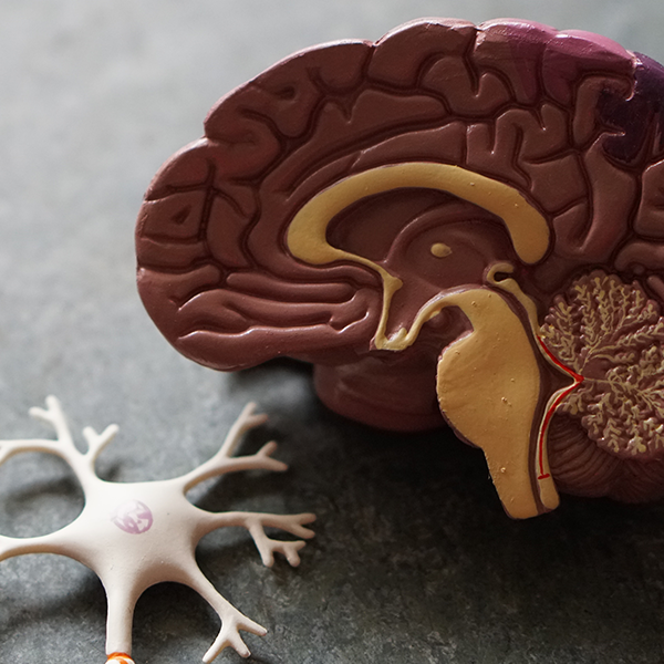 Why you should teach your students about neuroplasticity